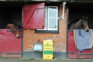 Great British success: Carruthers and his Gold Cup-winning brother Coneygree