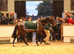 Tom Malone and Joe Tizzard look on as Harlem sells to Australia for 520,000gns