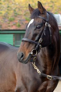 Kayf Tara has proved that jumps sires can excel while standing in Britain