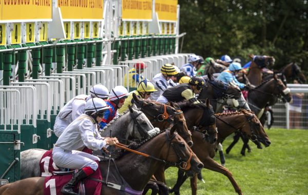 Runners at Goodwood