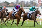 Humidor wins the Memsie Stakes