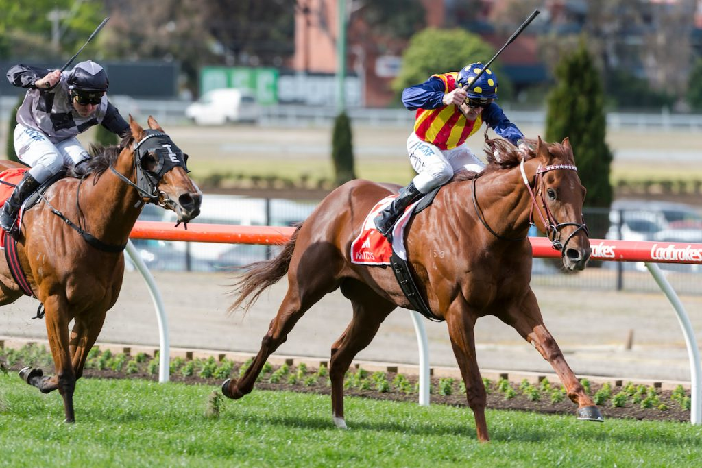 Nature Strip (Nicconi - Strikeline) ridden by Mark Zahra leads Houtzen home in the Mitty's McEwen Stakes (G2) over 1000m at The Valley Racecourse. 8 September 2018. Photo credit Darren Tindale / The Image is Everything.