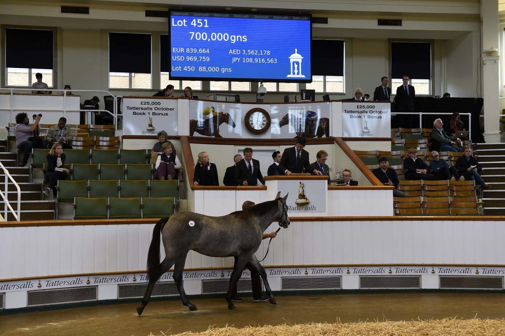 A lot goes through the ring at Book 1 of the Tattersalls October Yearling Sale