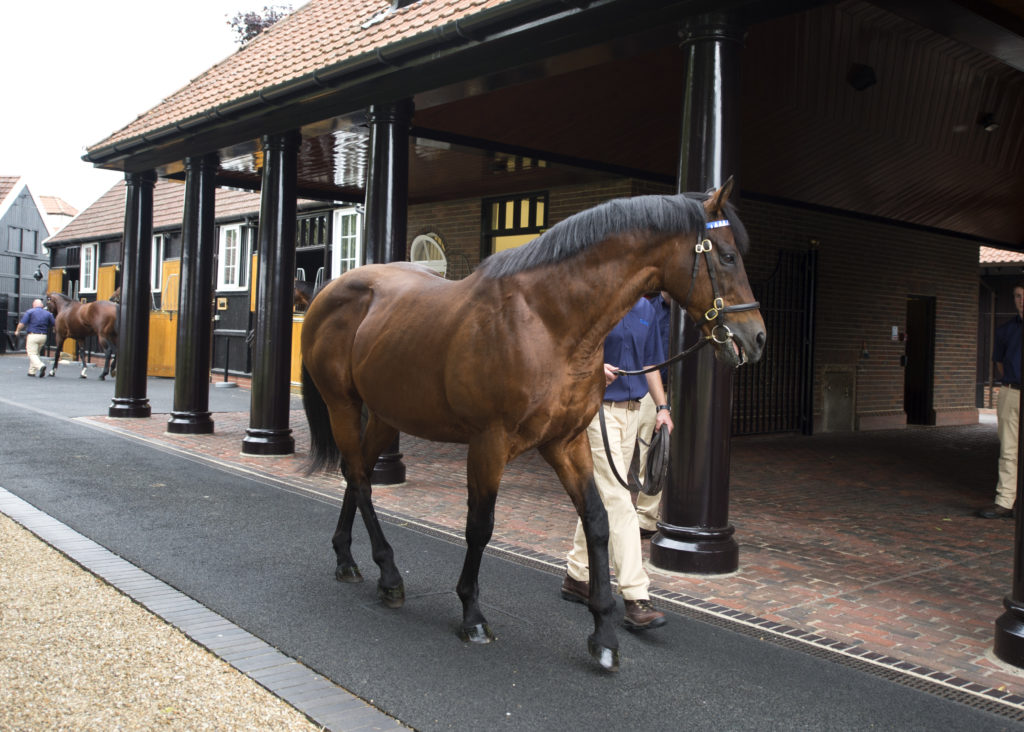 dubawi stallion parade