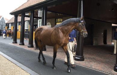 dubawi stallion parade