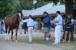 Horses inspected