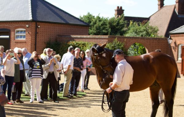 Frankel, Rob and