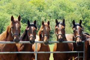 The yearling colts at Ashbrittle include a full-brother to Harbinger, second left