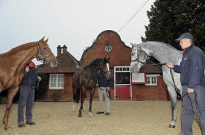 Dutch Art, Intello and Lethal Force in the stallion yard