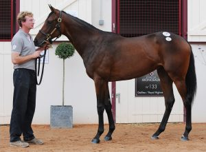Chicquita as a yearling, shortly after selling for €600,000 in Deauville