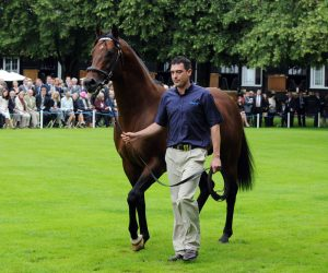 Exceed And Excel is to cover Black Caviar at Darley's farm in the Hunter Valley