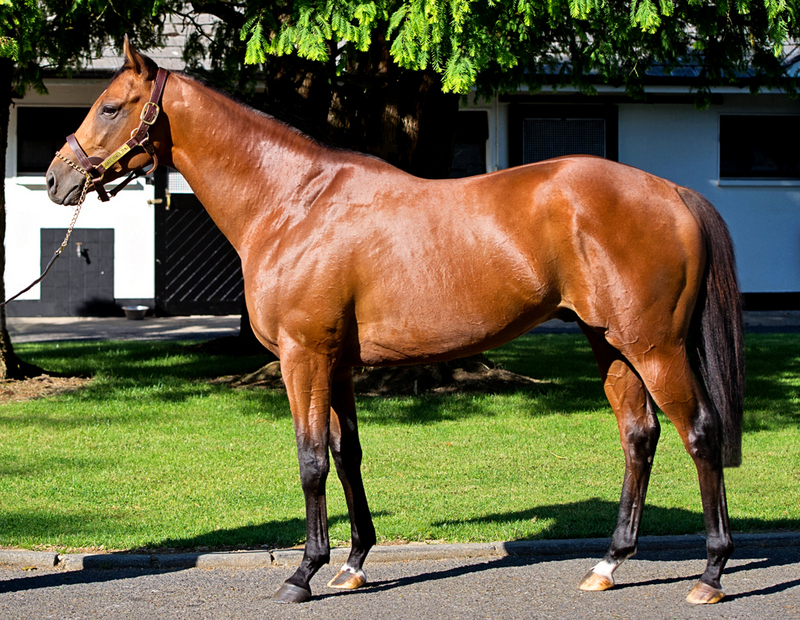 Image result for Gale Force Ten sire
