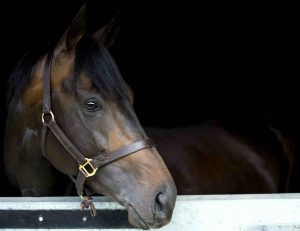 Golden Horn has joined 2008 Derby victor New Approach at Dalham Hall Stud