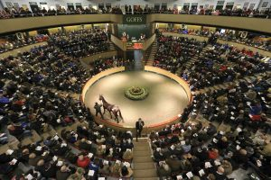The packed sales ring at Goffs as the Paulyn Dispersal gets underway