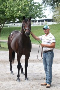 The $2.5 million son of War Front from Woods Edge Farm