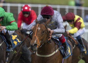 Hannon's leading two-year-old Mehmas will stand at Tally-Ho Stud in 2017