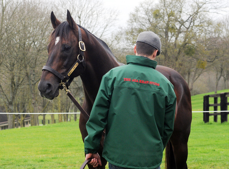 Redoute's Choice is now the sire of 100 stakes winners