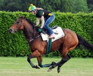 Sea Siren and Helen Smith on Newmarket's Limekilns gallop