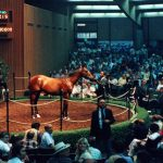 Seattle Dancer 1985 July Selected Yearling Sale