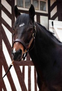 Soldier Of Fortune: new at Coolmore