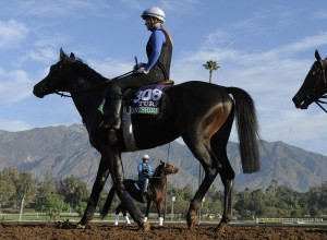 European export Flintshire is impressing American racing followers with his acceleration